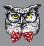 Hipster Owl with glasses and bow tie. Glasses and tie are separated.  Stock Photography