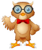 Hipster owl in glasses and bow tie Stock Photos