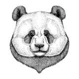 Hipster Panda Cute bamboo bear Image for tattoo, logo, emblem, badge design. Hipster Panda Cute bear Image for tattoo, logo, emblem, badge design Stock Photo