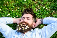 Hipster on peaceful face lays on grass, top view. Guy looks nicely with daisy or chamomile flowers in beard. Man with. Long beard and mustache, defocused green Royalty Free Stock Images