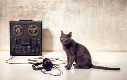 Hipster pet cat with magnetophone and headphones. Hipster pet cat with magneto-phone and headphones Royalty Free Stock Photos