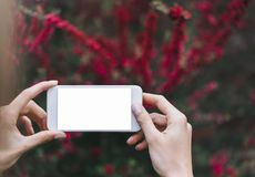 Hipster photograph on smartphone or technology, mock up of blank screen. Girl using cellphone on red flowers background. Hands. Holding gadget on blur. Mockup royalty free stock photo
