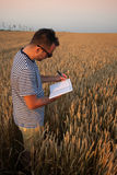 Hipster Poet in Wheat Field. Poetic hipster writing in field of wheat over beautiful sunset Royalty Free Stock Photos