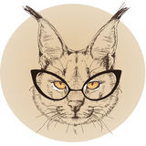 Hipster portrait of bobcat with glasses Stock Photos