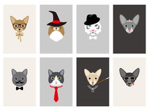 Hipster, portrait of cat, gentlemen cat Royalty Free Stock Images