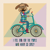 Hipster poster with nerd dog riding bike Royalty Free Stock Photos