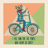 Hipster poster with nerd owl riding bike Royalty Free Stock Images