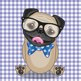 Hipster Pug Dog Royalty Free Stock Photo