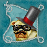 Hipster pug portrait Stock Photo