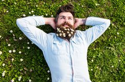 Hipster on relaxed face lays on grass, top view. Appeasement concept. Guy looks nicely with daisy or chamomile flowers. In beard. Man with beard and mustache Royalty Free Stock Photos
