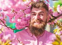 Hipster in roze overhemd dichtbij tak van sakura Harmonie met aardconcept Gebaarde mens met modieus kapsel met sakura royalty-vrije stock afbeeldingen