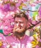 Hipster in roze overhemd dichtbij tak van sakura Mens met baard en snor op het glimlachen gezicht dichtbij bloemen Gebaarde mens  royalty-vrije stock afbeelding