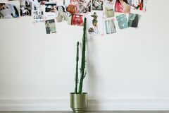 Hipster scandinavian interior design. Cactus,mood board on the white wall stock photo