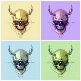 Hipster skulls with horns Royalty Free Stock Images