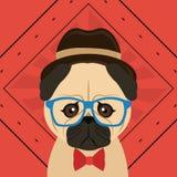 Hipster style pug dog image