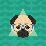 Hipster style pug dog  image Royalty Free Stock Images