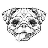 Hipster style sketch of funny Pug dog. vector illustration. Royalty Free Stock Images