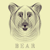 Hipster stylize vector bear Royalty Free Stock Photos