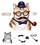 Hipster tabby cat isolated on white with hipster Royalty Free Stock Photos