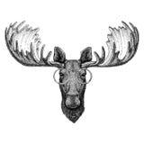 Hipsteramerikaanse elanden, elanden die glazenbeeld voor tatoegering, embleem, embleem, kentekenontwerp dragen Stock Afbeeldingen