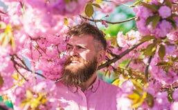 Hipsteren i rosa skjorta nära förgrena sig av det sakura trädet Mannen med skägget och mustaschen på att le framsidan nära blomma arkivbilder