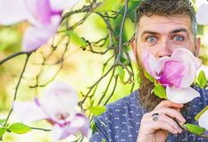 Hipsteren tycker om arom av blomningen Den skäggiga mannen med ny frisyr sniffar blom av magnolian Man med skägget och mustaschen royaltyfri bild