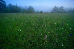 Hircinum del Himantoglossum, orchidea di lucertola, dettaglio delle piante selvatiche della fioritura, Jena, Germania Natura in E immagini stock
