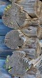 Hirnholz 1 lizenzfreie stockbilder
