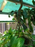 Hirondelle d'oiseau de mère image stock
