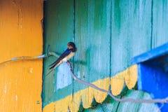 Hirondelle de grange sur le fil sur le fond de la maison en bois Photos stock