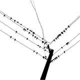 Hirondelle de silhouette Images libres de droits