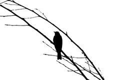 Hirondelle sur la branche d'arbre Photographie stock