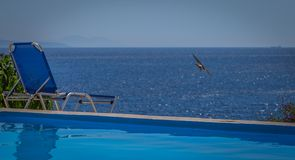 Hirondelle volant au-dessus de la mer par la piscine images libres de droits