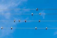 Hirondelles sur des fils sous un ciel bleu Photo stock