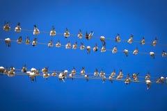 Hirondelles sur un fil Photo libre de droits
