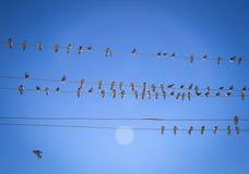 Hirondelles sur un fil Photos libres de droits