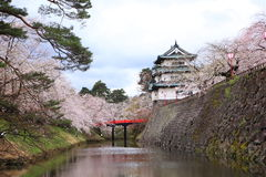 Hirosaki castle and cherry blossoms Royalty Free Stock Photo