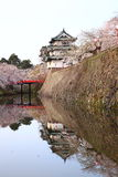 Hirosaki castle and cherry blossoms Royalty Free Stock Image