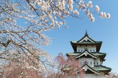 Hirosaki castle and Sakura cherry blossom tree royalty free stock photos
