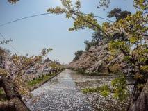 Hirosaki Cherry Blossom Festival 2018 no parque de Hirosaki, Aomori, Tohoku, Japão em abril 28,2018: Vistas espetaculares do foss Fotos de Stock