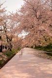 Hirosaki Cherry Blossom Festival 2018 no parque de Hirosaki, Aomori, Tohoku, Japão em abril 28,2018: Vistas espetaculares do foss Imagem de Stock