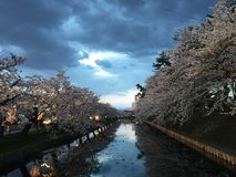 Evening view at Cherry Blossom Sakura Festival during spring stock photography