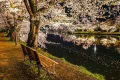 Free Hirosaki Park Cherry Blossom Matsuri Festival Light Up At Night In Springtime Season Stock Photography - 170650742