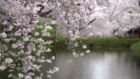 Hirosaki park cherry blossoms matsuri festival in springtime season beautiful morning day