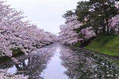 Hirosaki sakuras flod Royaltyfria Foton