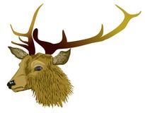 Hirsch der roten Rotwild Stockbild