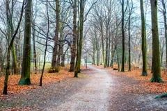 Hirschpark Hamburg, Tyskland Royaltyfria Foton