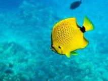 Hirsestartwert für zufallsgenerator Basisrecheneinheits-Fische Stockfotos