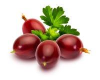 Hirtellum del Ribes de los espinosas de Rojas de los grosellas de Deliciosas - montó el rojo espinoso rojo blancoDelicious c del  imagen de archivo libre de regalías