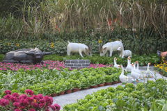 Hirtenlandschaft Stockfotos